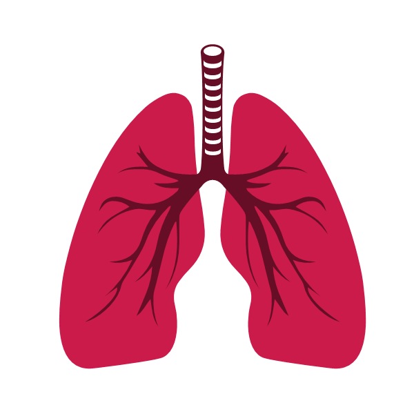 Respiratory (Lungs Cure)